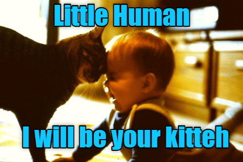 Cat - Photo caption - Little Human will be your kitteh