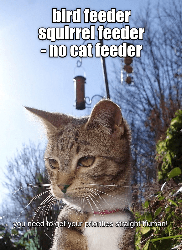Cat - bird feeder squirrel feeder -nO cat feeder you need to get your priorities straight human!,