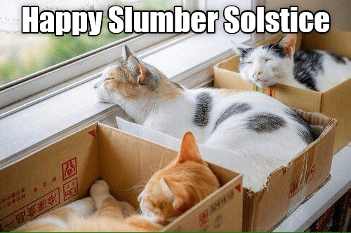 Cat - Happy Slumber Solstice 冷凍食品一 22