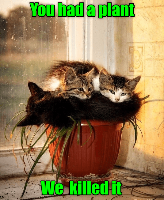 Cat - You had a plant We killed it
