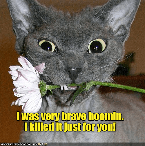 Cat - I was very brave hoomin. I killed it just for you! ICANHASCHEEZEURGER CoM