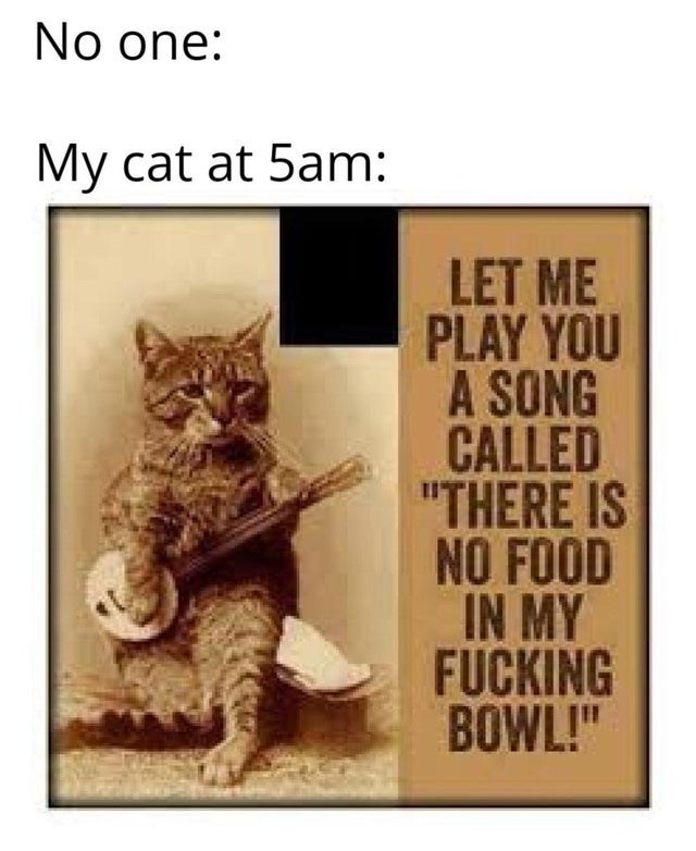"""Cat - No one: My cat at 5am: LET ME PLAY YOU A SONG CALLED """"THERE IS NO FOOD IN MY FUCKING BOWL!"""""""