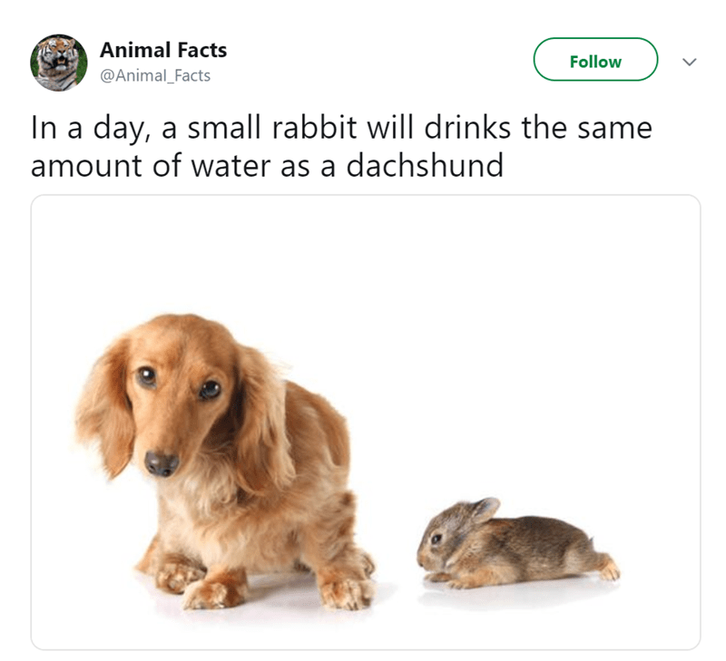 Canidae - Animal Facts Follow @Animal_Facts In a day, a small rabbit will drinks the same amount of water as a dachshund