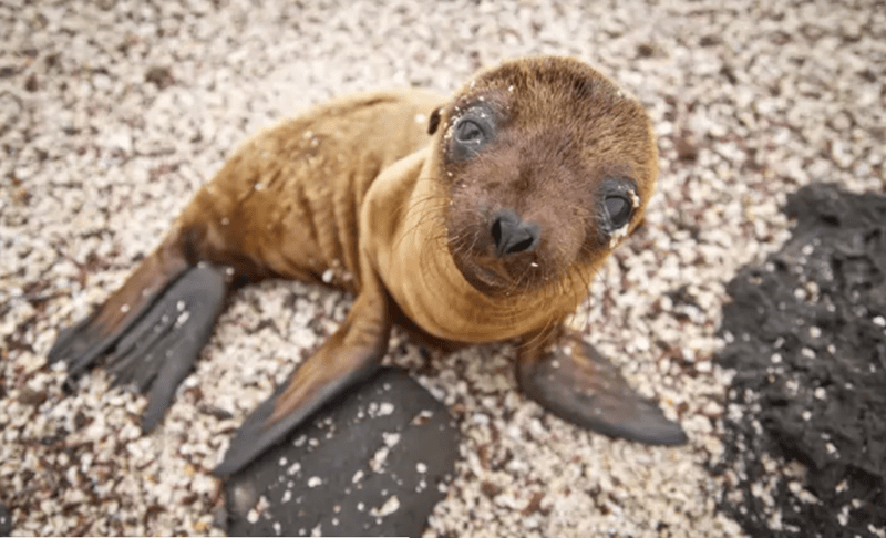 cute baby seal - so cute and floppy