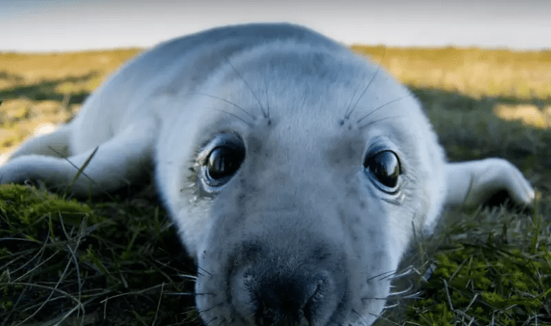 cute baby seal - passed out from exhaustion