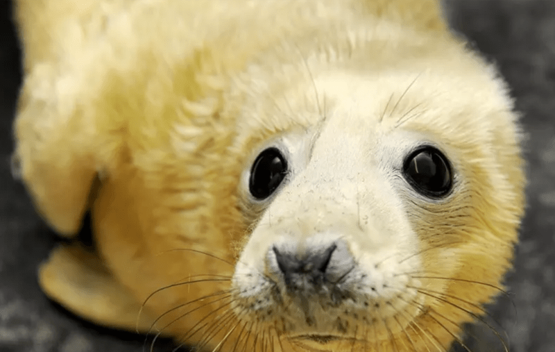 cute baby seal - Mammal