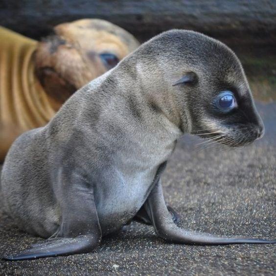 cute baby seal - Mammal