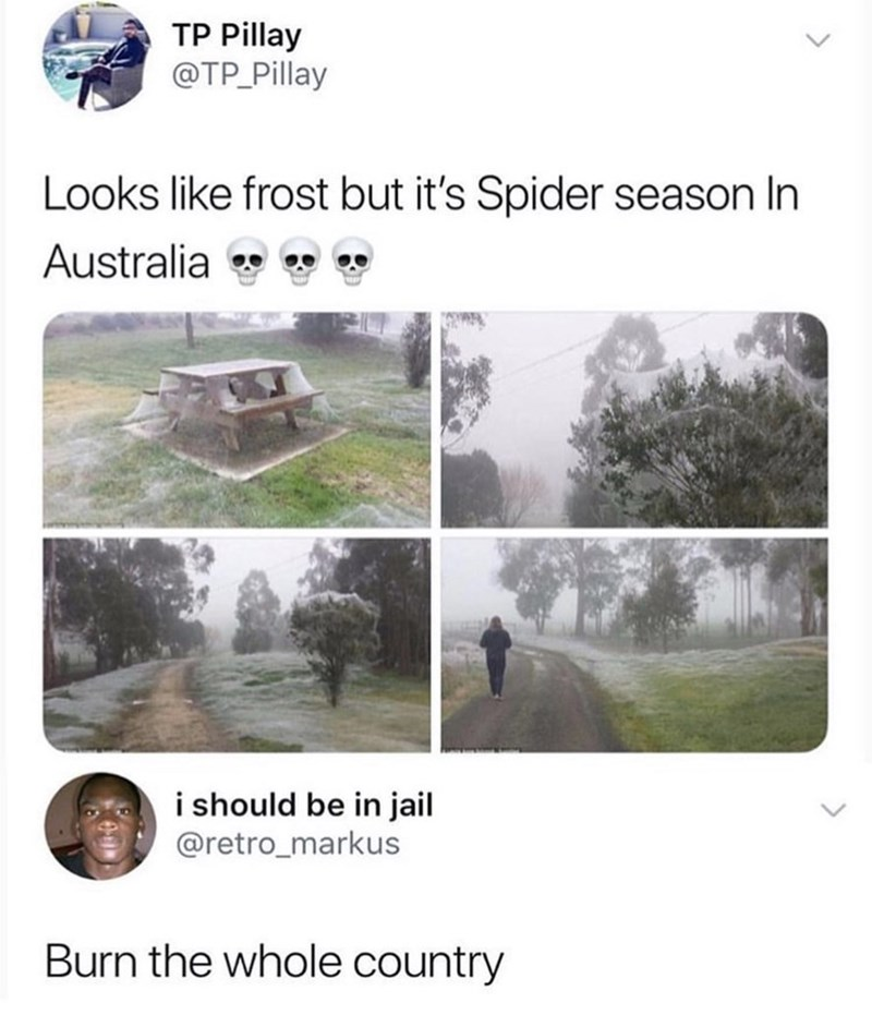 meme - Adaptation - TP Pillay @TP Pillay Looks like frost but it's Spider season In Australia i should be in jail @retro_markus Burn the whole country