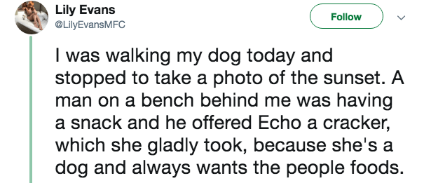 creepy encounter - Text - Lily Evans @LilyEvansMFC Follow I was walking my dog today and stopped to take a photo of the sunset. A man on a bench behind me was having a snack and he offered Echo a cracker, which she gladly took, because she's a dog and always wants the people foods.