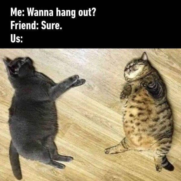 Cat - Me: Wanna hang out? Friend: Sure. Us: