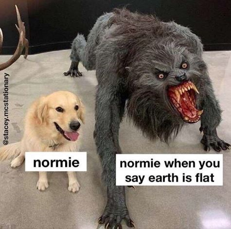 Meme - Dog - normie normie when you say earth is flat @stacey.mcstationary