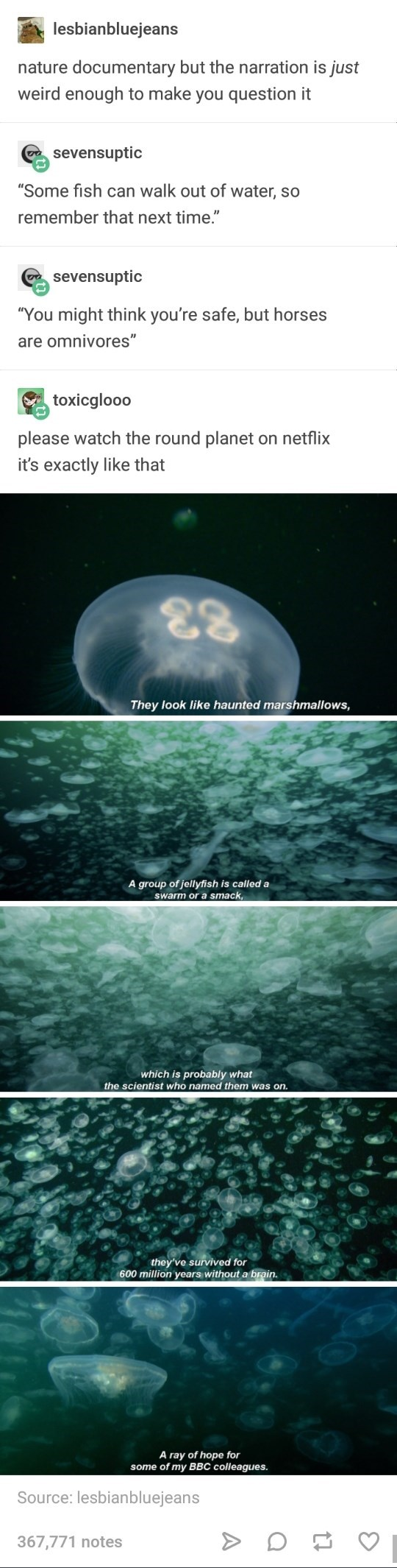 Tumblr - funny meme about nature documentaries