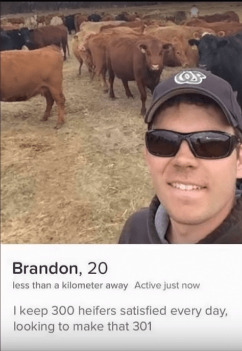 tinder funny - Bovine - Brandon, 20 less than a kilometer away Active just now I keep 300 heifers satisfied every day, looking to make that 301