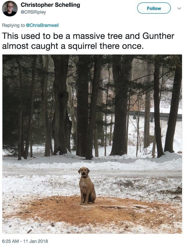 funny dog - Wildlife - Christopher Schelling Follow @CRSRipley Replying to @ChrisBramwell This used to be a massive tree and Gunther almost caught a squirrel there once 6:25 AM -11 Jan 2018