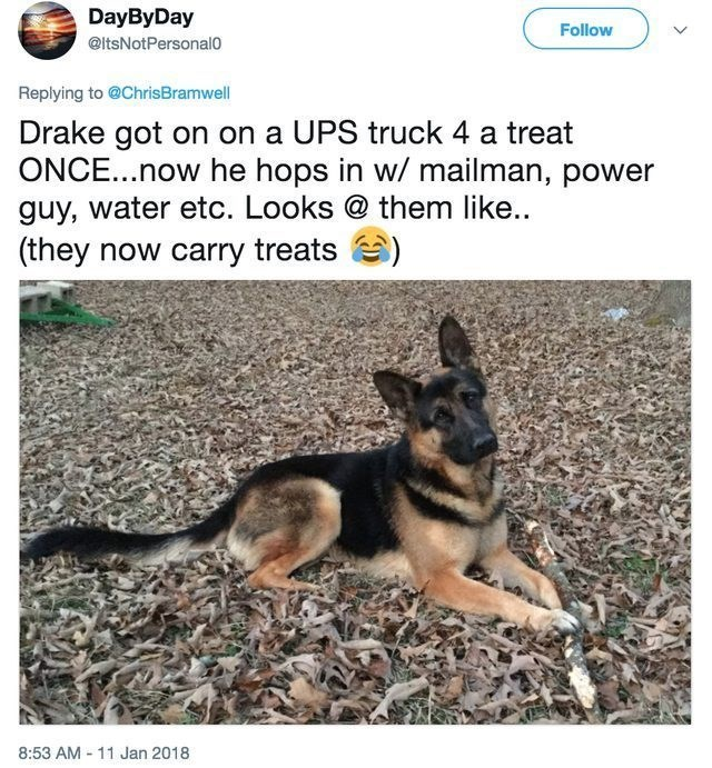 funny dog - Dog - DayByDay Follow @ltsNotPersonalo Replying to @ChrisBramwell Drake got on on a UPS truck 4 a treat ONCE...now he hops in w/ mailman, power guy, water etc. Looks @ them like.. (they now carry treats 8:53 AM -11 Jan 2018