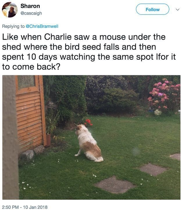 funny dog - Lawn - Sharon Follow @cascaigh Replying to @ChrisBramwell Like when Charlie saw a mouse under the shed where the bird seed falls and then spent 10 days watching the same spot Ifor it to come back? 2:50 PM 10 Jan 2018