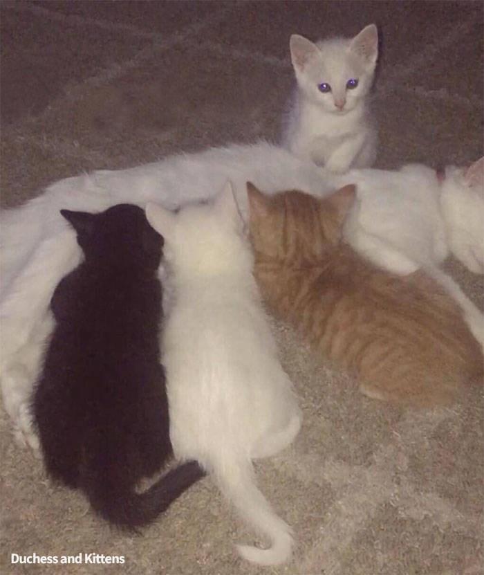 Cat - Duchess and Kittens