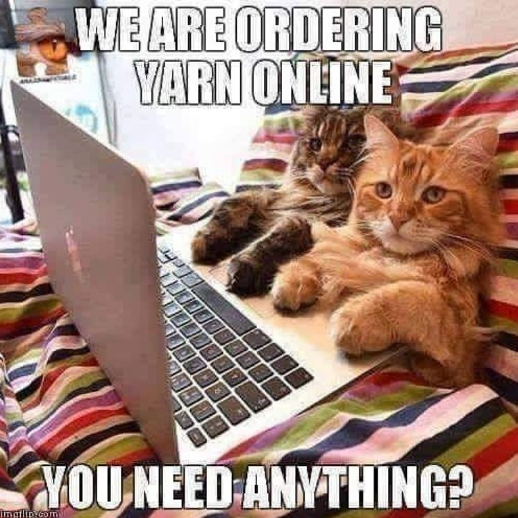 Cat - WE ARE ORDERING YARN ONLINE YOUNEED ANYTHING? imafiipy.com