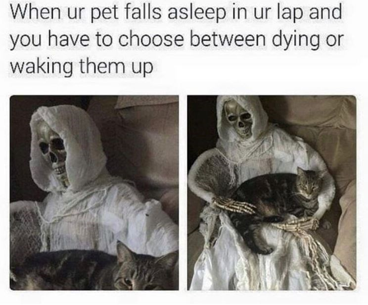 Text - When ur pet falls asleep in ur lap and you have to choose between dying or waking them up