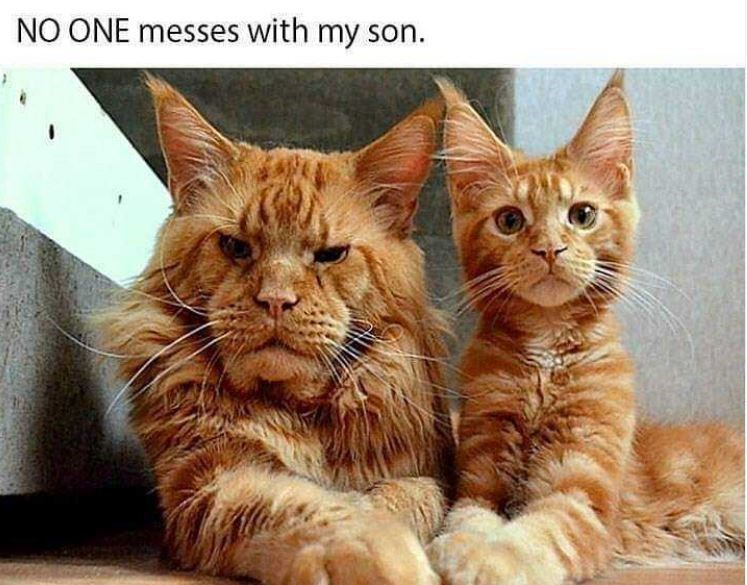 Cat - NO ONE messes with my son.