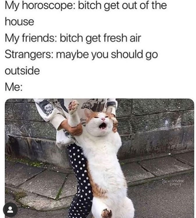Cat - My horoscope: bitch get out of the house My friends: bitch get fresh air Strangers: maybe you should go outside Me: