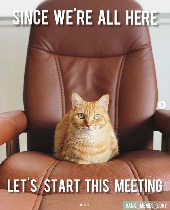 Cat - SINCE WE'RE ALL HERE LET'S START THIS MEETING DANK_MEMES LOGY