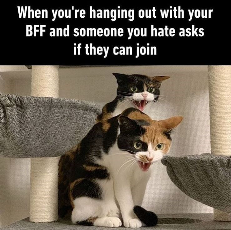 Cat - When you're hanging out with your BFF and someone you hate asks if they can join