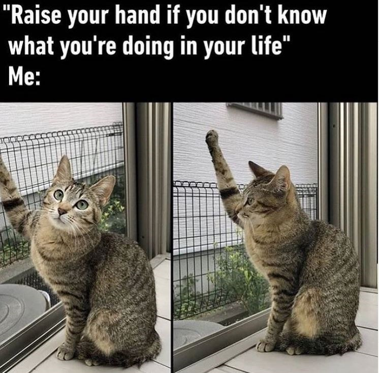 """Cat - """"Raise your hand if you don't know what you're doing in your life"""" Me:"""