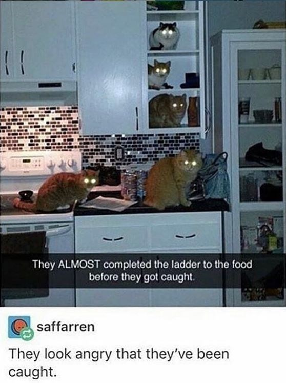 Property - K t They ALMOST completed the ladder to the food before they got caught. saffarren They look angry that they've been caught