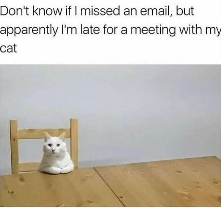 Text - Don't know if I missed an email, but apparently I'm late for a meeting with my cat