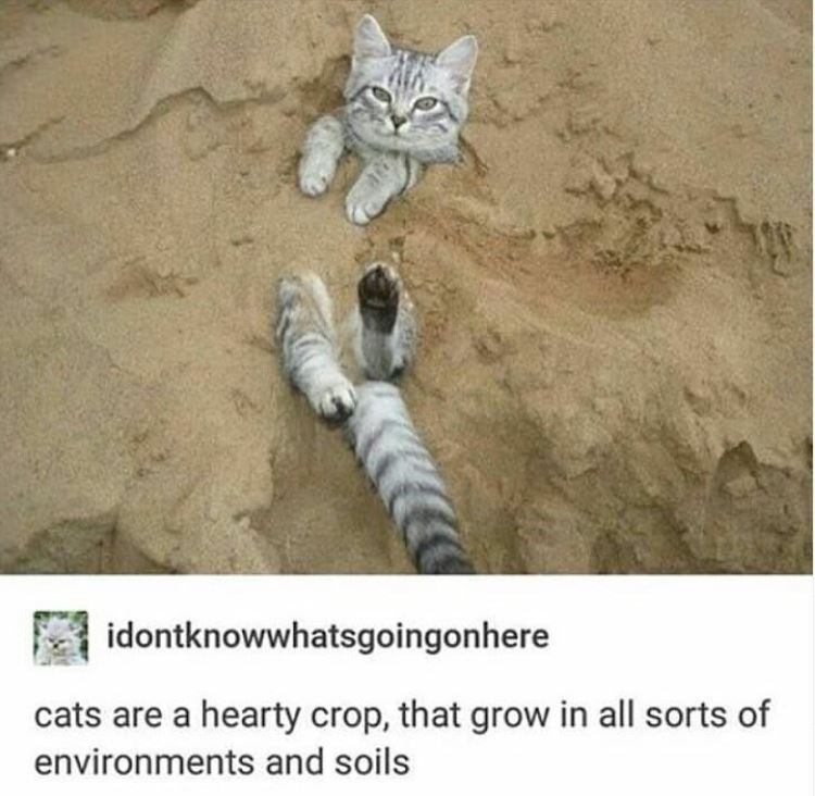 Organism - idontknowwhatsgoingonhere cats are a hearty crop, that grow in all sorts of environments and soils