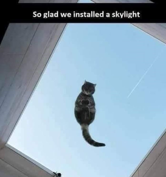 Cat - So glad we installed a skylight