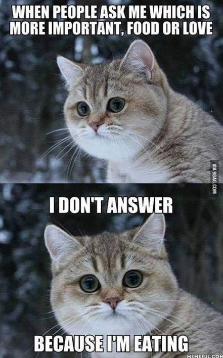 Cat - WHEN PEOPLE ASK ME WHICH IS MORE IMPORTANT, FOOD OR LOVE IDON'T ANSWER BECAUSE IM EATING MEMEFULCOM VIA 9GAG.COM