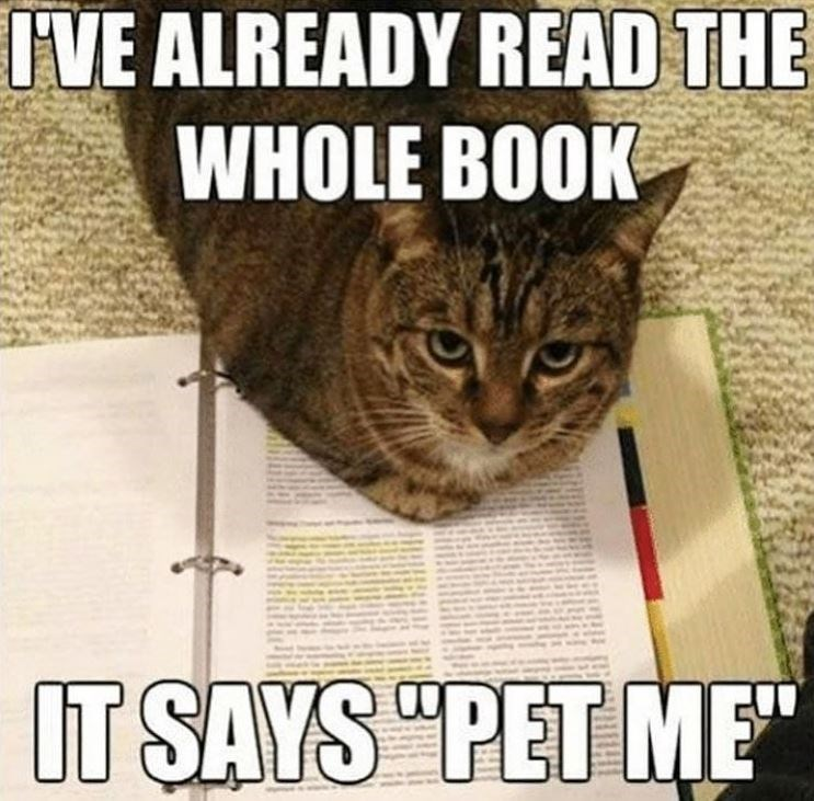 """Cat - IVE ALREADY READ THE WHOLE BOOK IT SAYS """"PET ME"""""""