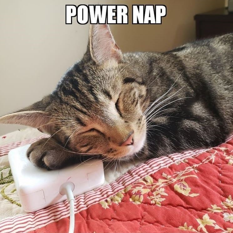 Cat - POWER NAP