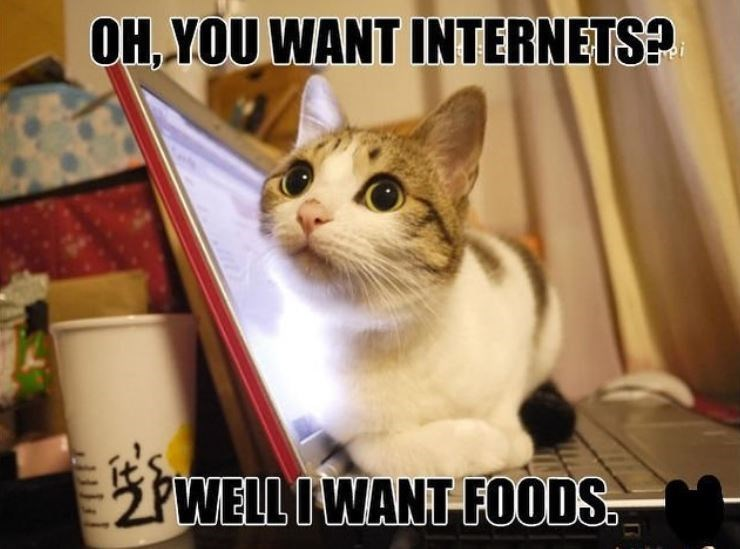 Cat - OH YOU WANT INTERNETS? PWELL IWANT FOODS