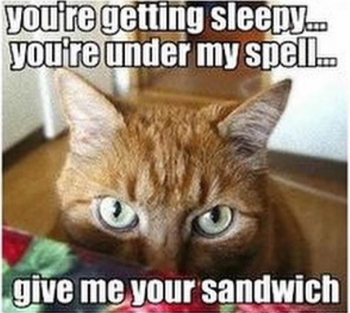 Cat - you're getting sleepy... you're under my spell give me your sandwich