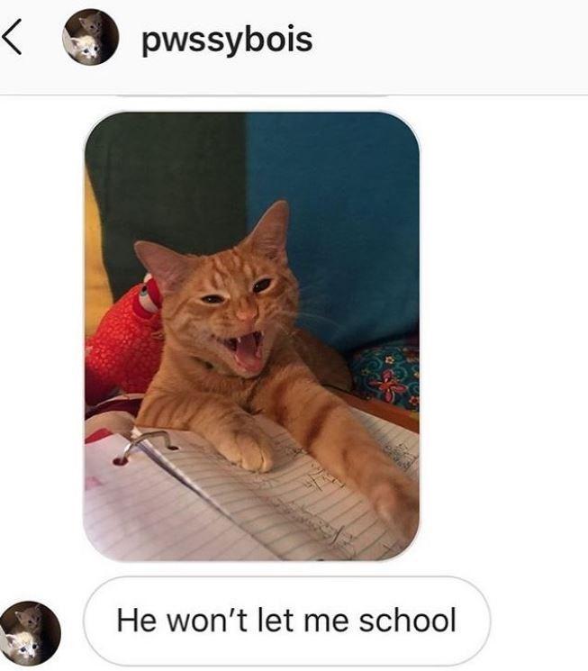 Cat - pwssybois He won't let me school