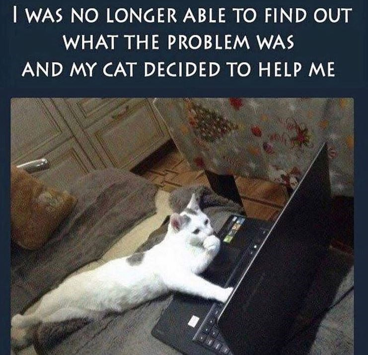 Cat - I WAS NO LONGER ABLE TO FIND OUT WHAT THE PROBLEM WAS AND MY CAT DECIDED TO HELP ME