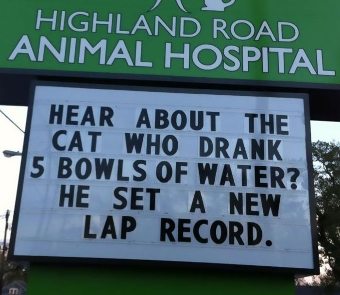 Text - HIGHLAND ROAD ANIMAL HOSPITAL HEAR ABOUT THE CAT WHO DRANK 5 BOWLS OF WATER? HE SET A NEW LAP RECORD.