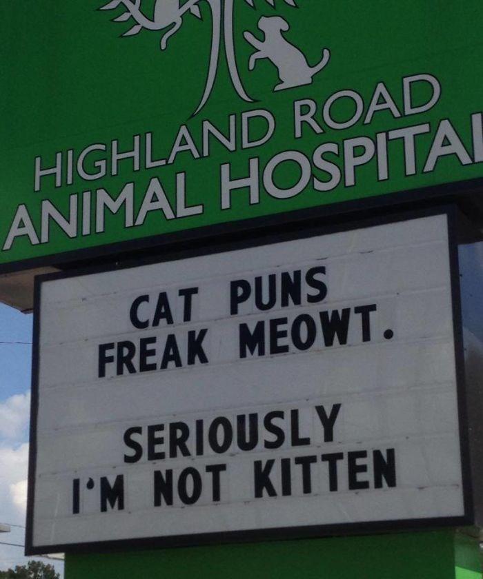 Text - HIGHLAND ROAD ANIMAL HOSPITAL CAT PUNS FREAK MEOWT. SERIOUSLY I'M NOT KITTEN