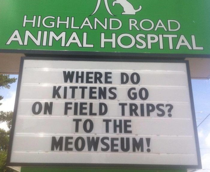 Text - HIGHLAND ROAD ANIMAL HOSPITAL WHERE DO KITTENS G0 ON FIELD TRIPS? TO THE MEOWSEUM!