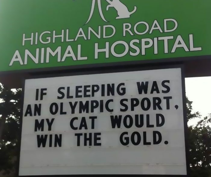 Text - HIGHLAND ROAD ANIMAL HOSPITAL IF SLEEPING WAS AN OLYMPIC SPORT, MY CAT WOULD WIN THE GOLD.