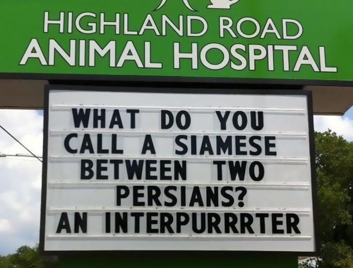 Text - HIGHLAND ROAD ANIMAL HOSPITAL WHAT DO YOU CALL A SIAMESE BETWEEN TWO PERSIANS? AN INTERPURRRTER
