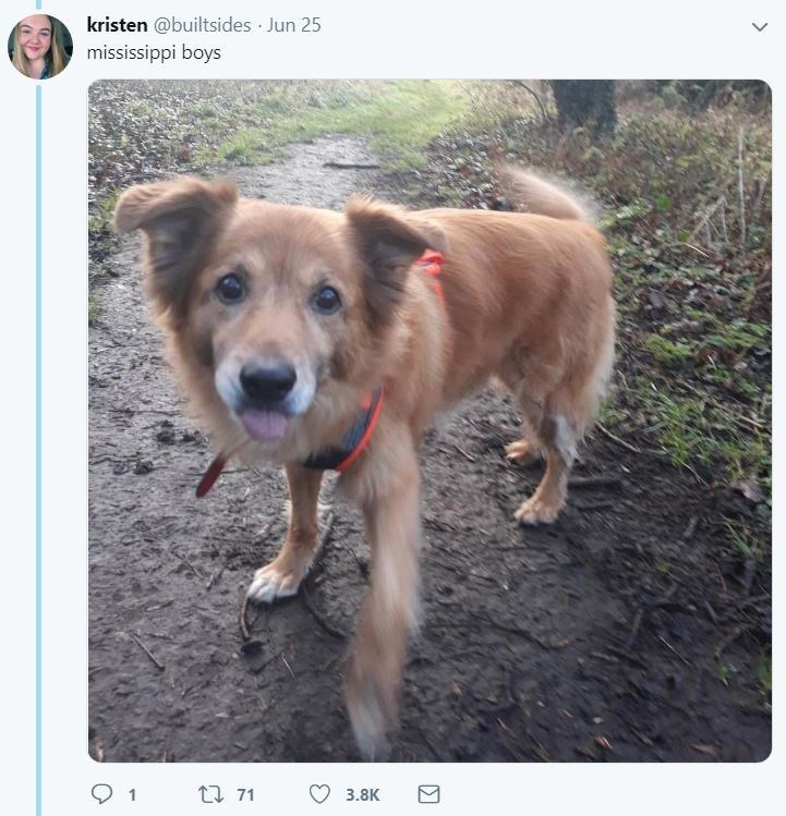 dog tweet - Dog breed - kristen @builtsides Jun 25 mississippi boys 1 t71 3.8K