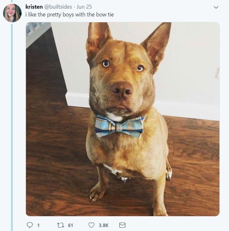 dog tweet - Dog - kristen @builtsides Jun 25 i like the pretty boys with the bow tie ti 61 3.8K