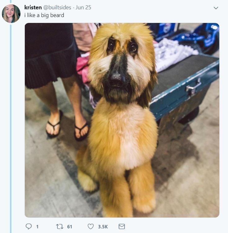 dog tweet - Dog - kristen @builtsides Jun 25 i like a big beard ti 61 3.5K
