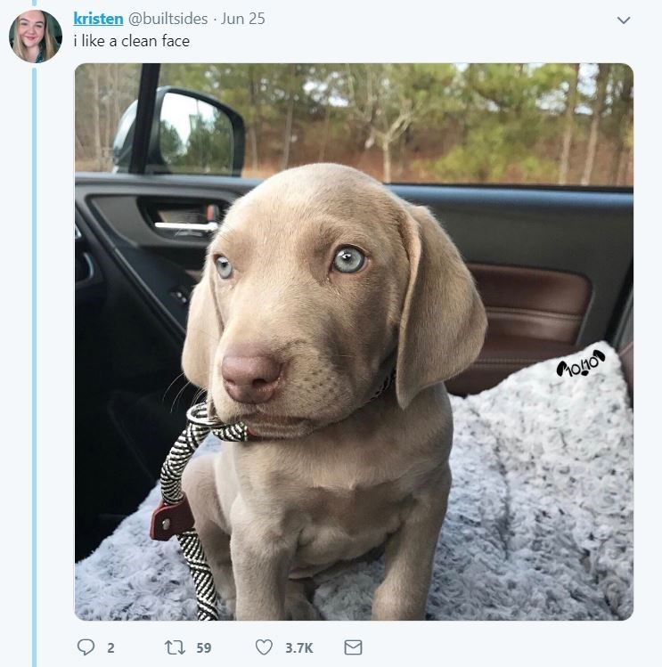 dog tweet - Dog - kristen @builtsides Jun 25 i like a clean face Moio t 59 2 3.7K