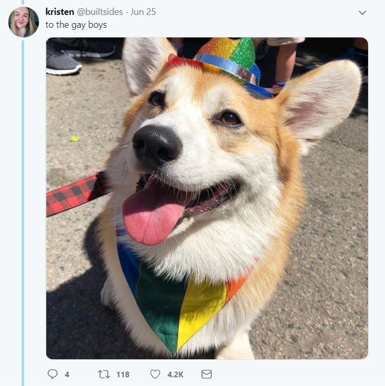 dog tweet - Dog - kristen @builtsides Jun 25 to the gay boys 1 118 4 4.2K