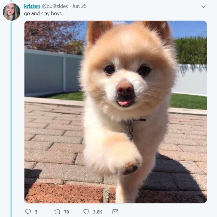dog tweet - Mammal - kristen @builtsides Jun 25 go and slay boys ti 70 3 3.8K